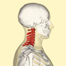 Cervical Spine An online course for physical therapists / physiotherapists