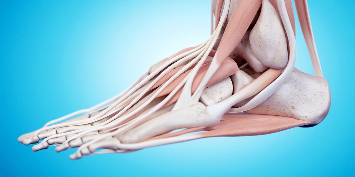 Foot and ankle An online course for physical therapists / physiotherapists