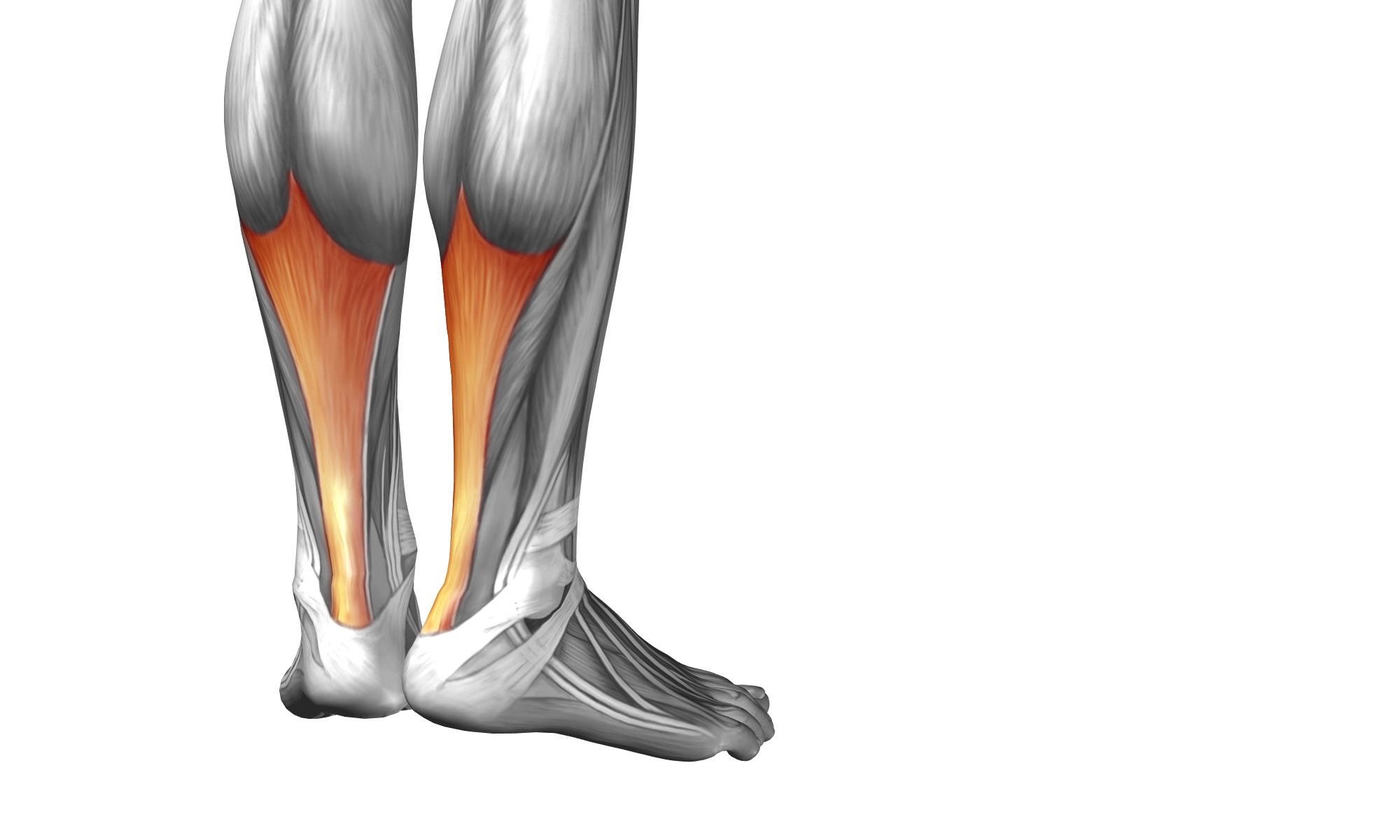 Tendinopathy - An online course for physical therapists / physiotherapists