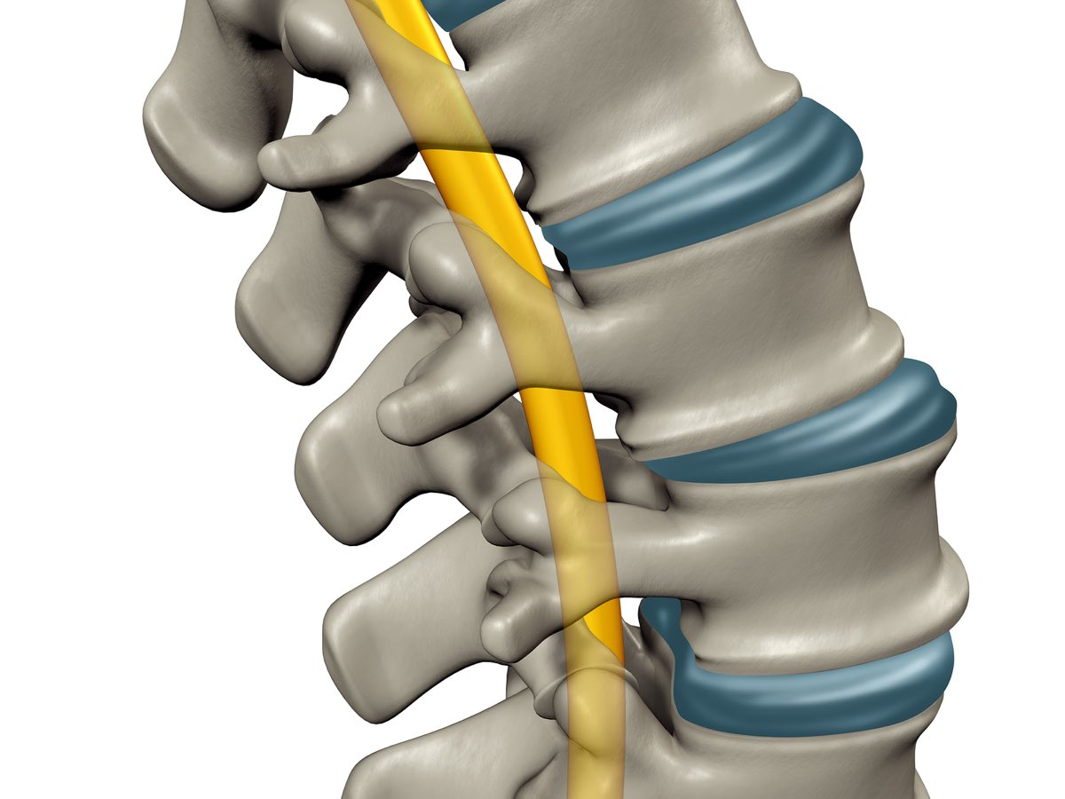 Introduction to Spinal Cord Injury - Review the fundamentals of SCI and related physiotherapy