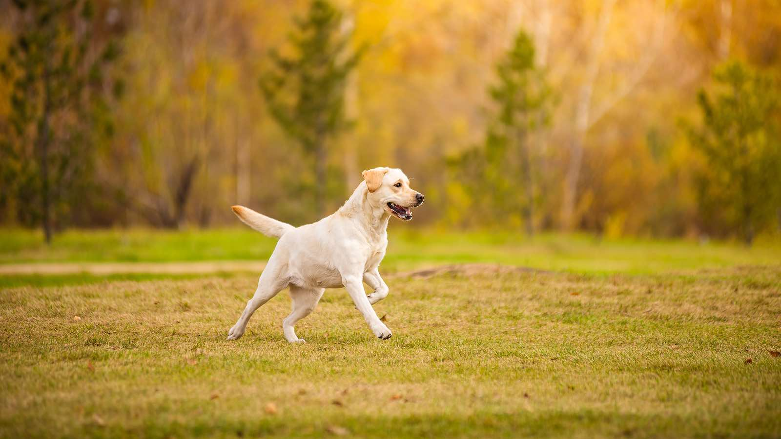 Managing Disorders of the Canine Front Limb : Enhance the outcomes of your canine patients who present with forelimb lameness