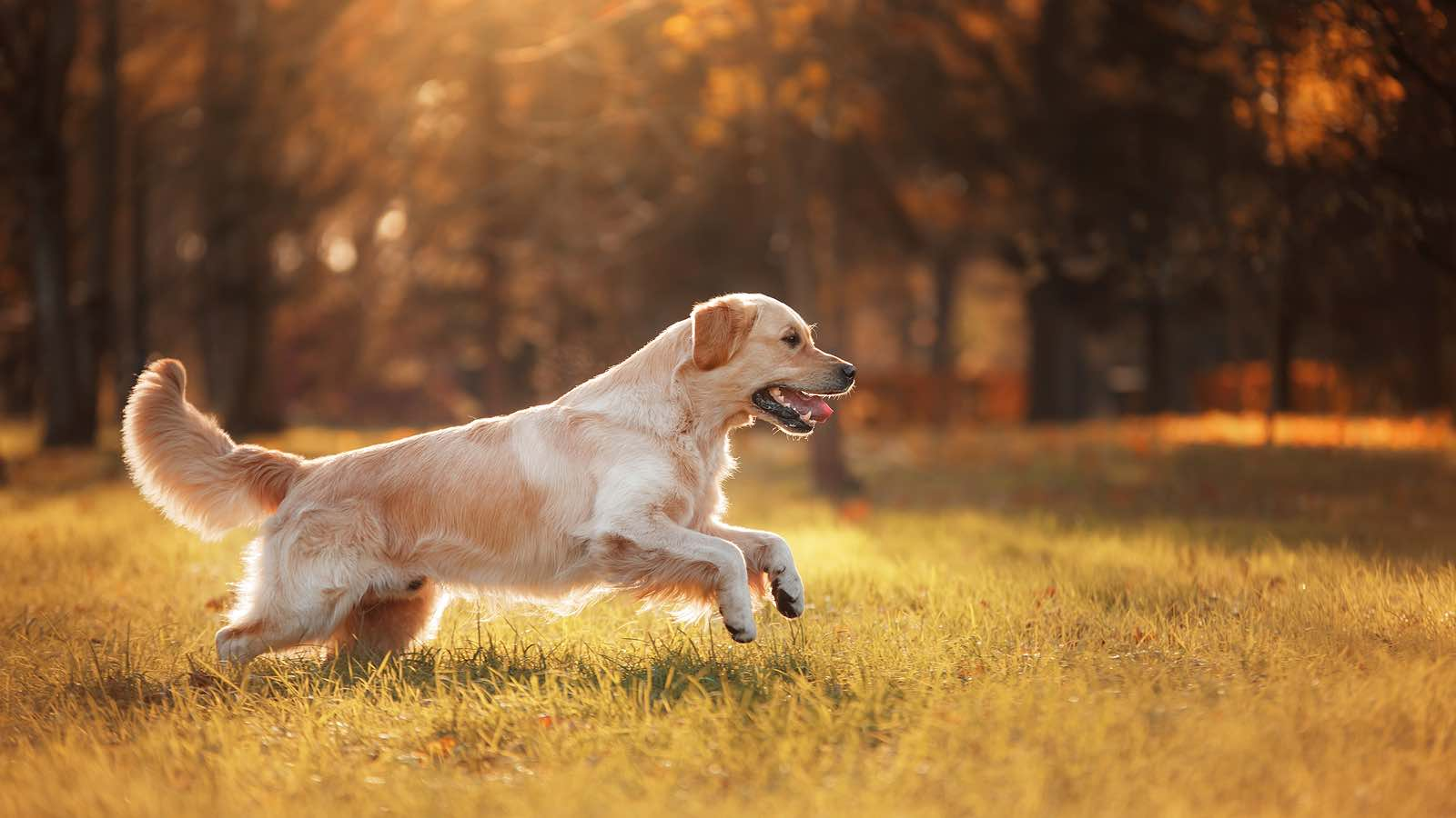 Managing Disorders of the Canine Hind Limb : Use the latest evidence-based interventions when treating hind limb lameness in dogs