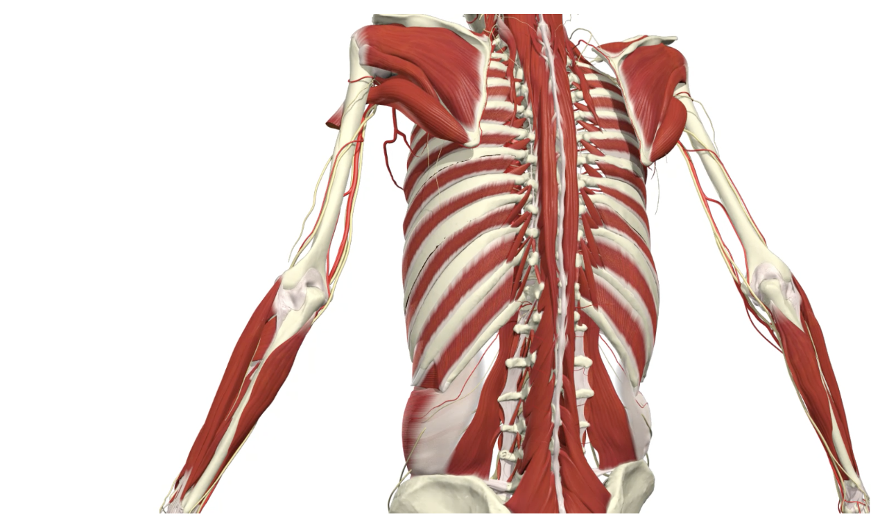 full body online anatomy