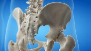 pelvis anatomy image