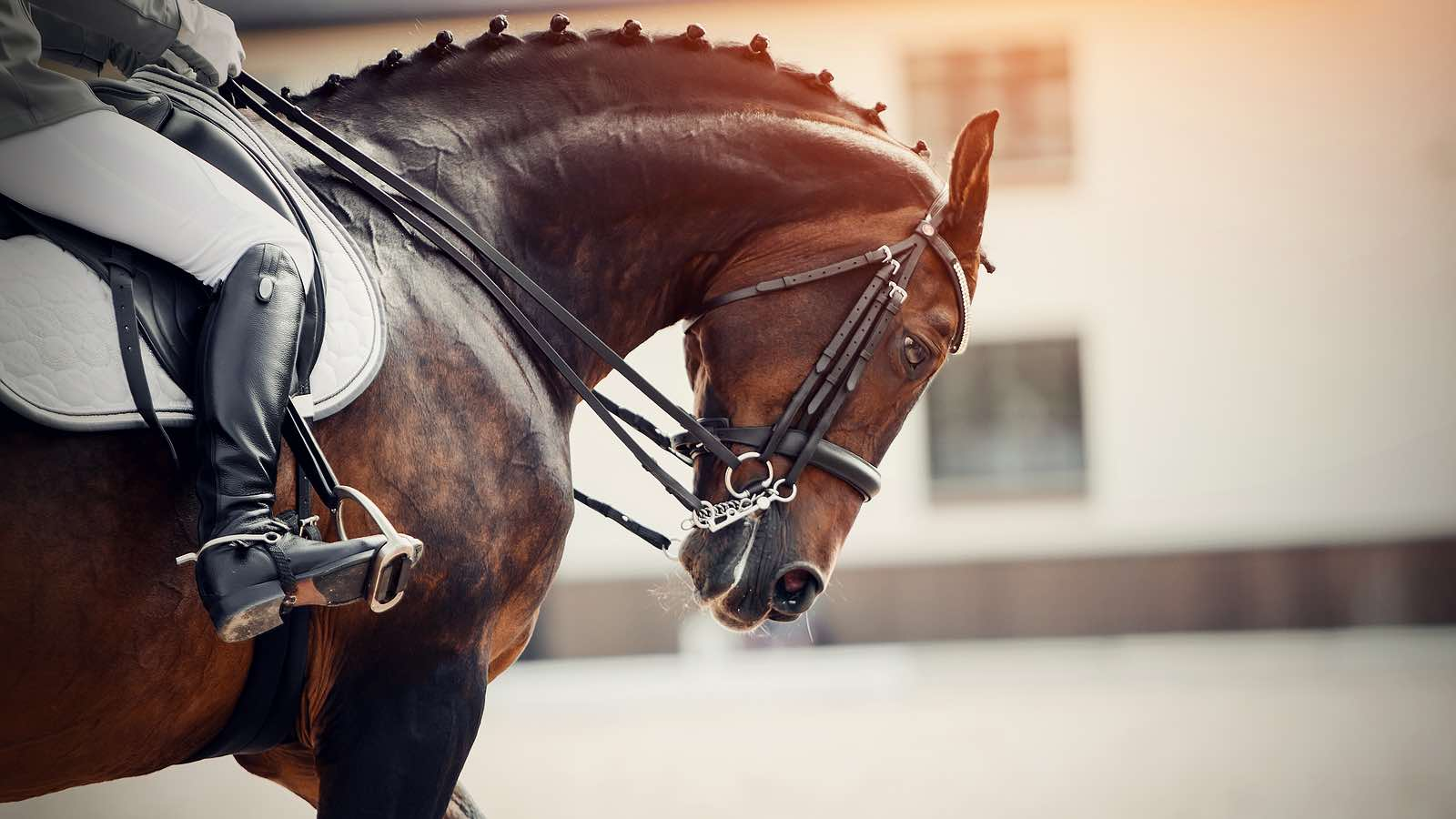 Assessment of the Equine Patient : Enhance your evaluation skills and get better overall results for your horse patients
