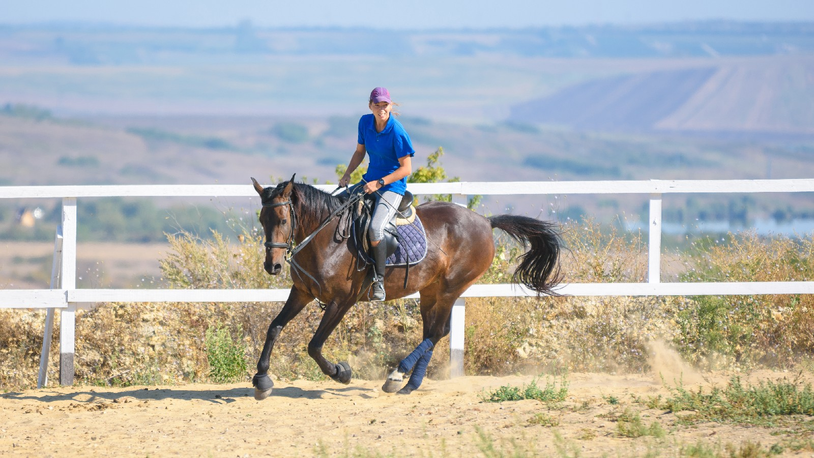 Anatomy and Common Injuries of the Equine Forelimb : Enhance outcomes for equine athletes with an in-depth understanding of common causes of forelimb lameness